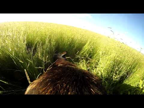 TuckerVision hunting coyotes 8/15/15