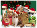 Christmas Jingle Cats