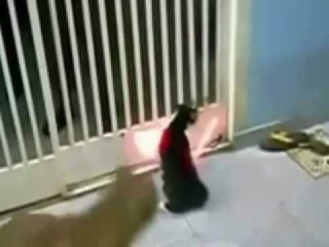 Gwiezdne wojny -kot jedi