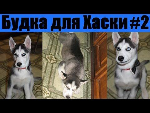 Будка для сибирской хаски / Dog house Husky 2-я часть