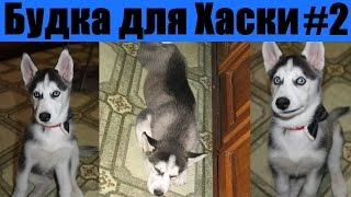 Будка для сибирской хаски / Dog house Husky 2-я часть