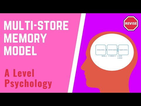 strengths and weaknesses of the multi stored memory model In the as unit 1 psychology exam 'cognitive psychology, developmental psychology and research methods' you will have to be able to talk about the multi-store model of memory and the working memory model and compare the two, using evidence and strengths and weaknesses to support your answer this hub should include.