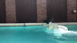 Training   Dog's first swim   Solid K9 Training Dog Training