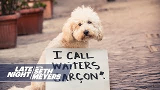 Extreme Dog Shaming: Faking a Disability Claim, Calling Waiters Garçon