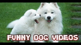 cute dog videos funny dog videos #funnyanimals baby dog videos