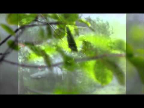 Трубецкой Ляпис - Русалки