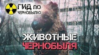 Животные Чернобыля - кадры обитателей Зоны Отчуждения сегодня