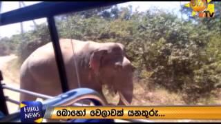 Tusker Nandimithra attacks a bus at Sithulpawwa