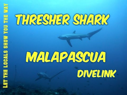 Documentary: Thresher Shark: Malapascua island, Cebu, Phillipinnes-Malapascua-Thresher Shark