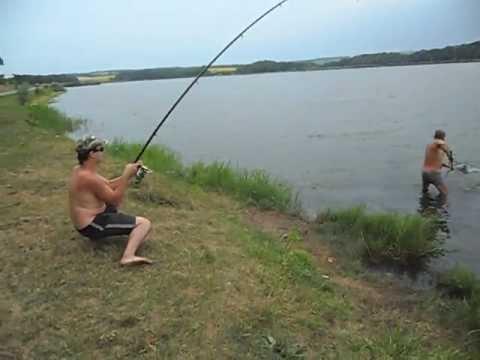 ловля толстолоба на 7 крючков
