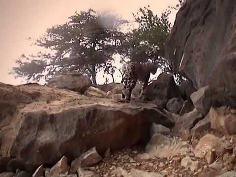 Pure Nature Specials Arabian Leopard Of Oman