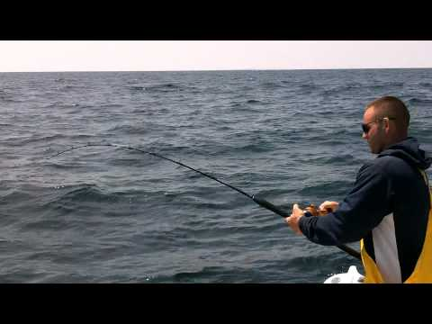 Cod Fishing On Stellwagen - Fast Fishing Light Tackle