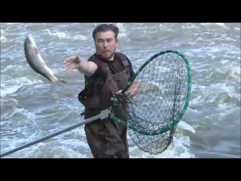 весенняя рыбалка на неве