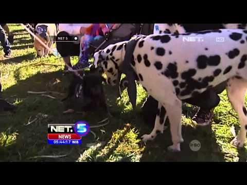 Dogs Wearing Bandana di Australia - NET5