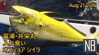 南房総・シイラ 富浦 共栄丸[Catching Dolphin Fish on Kyouei-maru in Minami-Boso] Aug 21 2016