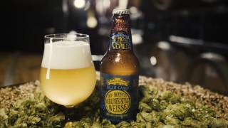 Beer Camp Across the World: Dry-Hopped Berliner-Style Weisse
