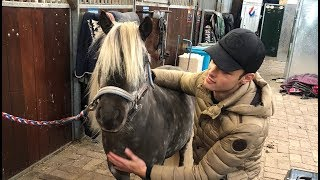MEETING MY NEW HORSE FOR THE FIRST TIME|| MATT HARNACKE