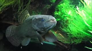 Southwest Region  US Fish and Wildlife Service