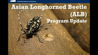 Update on Asian Longhorned Beetle