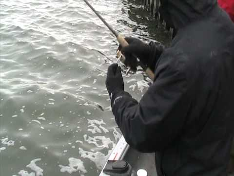 Big Brown Trout Fishing spinning tackle Milwaukee harbor