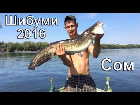 Ловля сома на воблер в августе 2016 года. Плавбаза Шибуми, рыбалка в Саратове на Волге