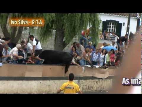 Touro salta muro nas Fontinhas e faz varios feridos