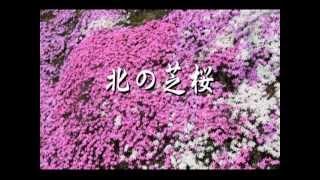 北の芝桜   日本クラウン 八木春子