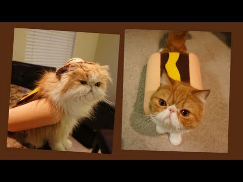 Kitten Dressed As A Hot Dog, Eating A Hot Dog