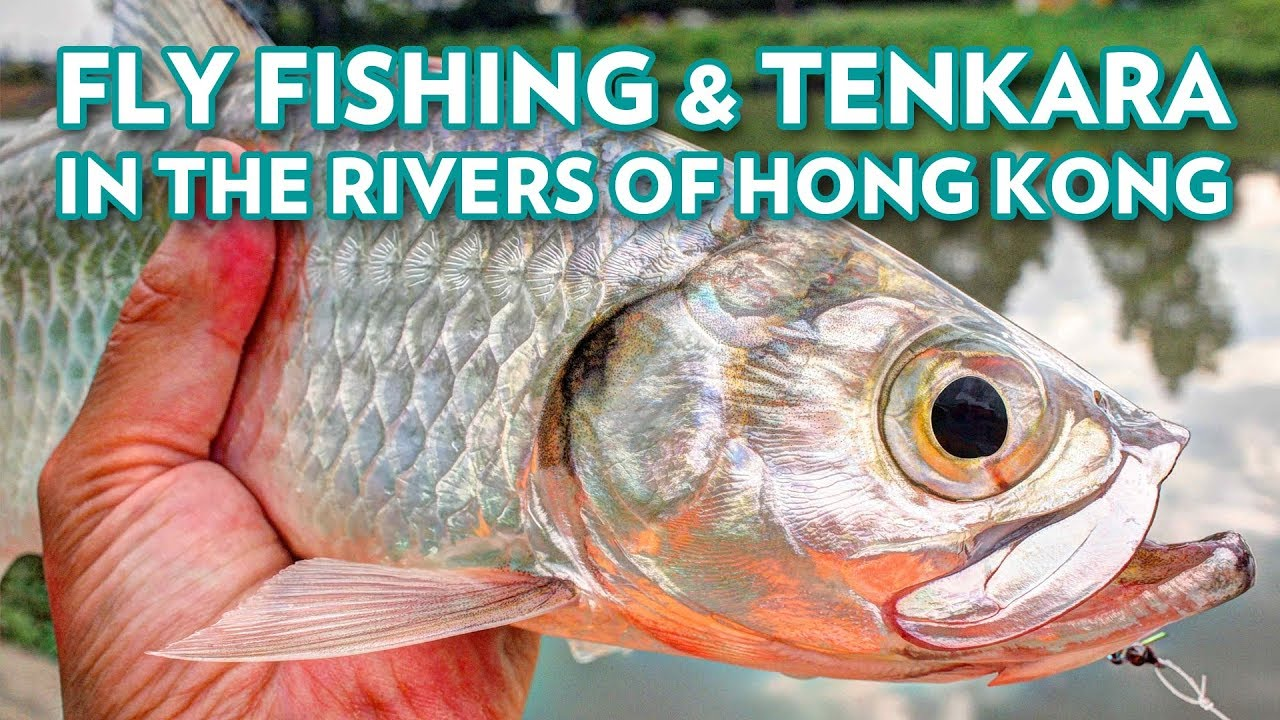 Fly Fishing in The Rivers of Hong Kong