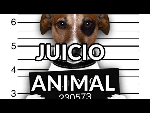 Nuestro Insolito Universo-Animales Juzgados