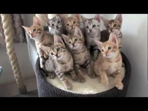 Gatinhos hipnotizados muito engraçados Movem-se ao som da música!