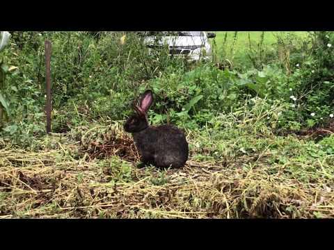 Убежала беременная крольчиха! Наши находки.