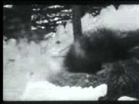 Видео бои собак - cfb