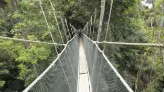 Canopy walk in Poring Hot Springs, Borneo