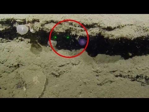 Extraña Criatura Marina Descubierta en el Fondo del Océano
