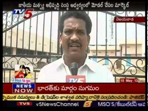 Model Fish Market in Vijayawada  TV5