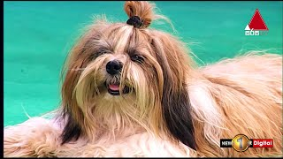 How To Care Shih Tzu Puppy's | My Pet | Kids 1st