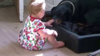 More Dangerous Doberman and a Cute Baby  Funny Videos 2015 WapRox com