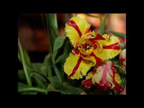 Singapore Orchid Garden Show.m2t