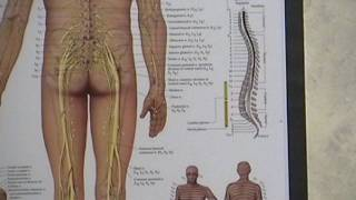 Sciatica - Sciatic Nerve Pain.  Troy, Ohio OH Chiropractor Dr. Jack Adrian ChiroCenter Chiropractic