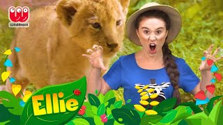 Ellie Explorer | Habitat Compilation | Learn Colors Kids TV shows | WildBrain Kids