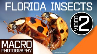 Florida Insects Macro Photography - 2nd video