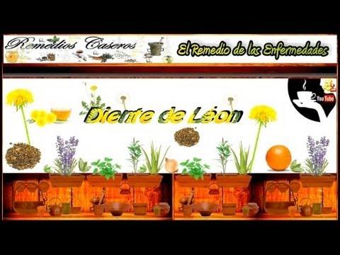 Beneficios del Diente de León, Infusiones y Remedios Caseros para Desintoxicar el Hígado