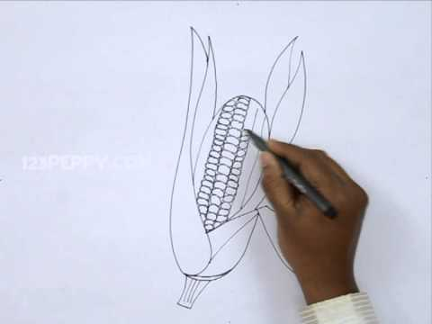 Indian Corn Drawing How to Draw a Corn