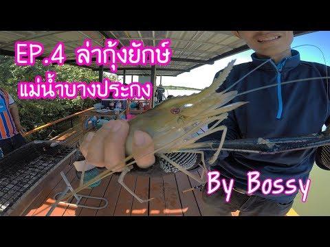 ตกกุ้งกัน Ep.4 ตกกุ้งแม่น้ำยักษ์ (The Giant Prawn Fishing In Bangpakong) กับแพ ซุ้มซารัน รอบ 2