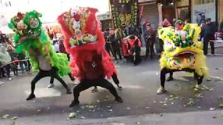 New York Lion Dance 2019 Brooklyn Lion CLUB múa lân 舞狮