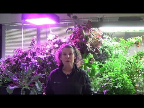 Grow Lighting for Aquaponics Part 4 - LED & Induction