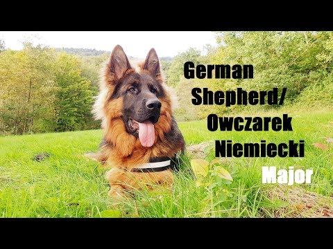 German Shepherd Grow From 1 To 10 Months/Dorastanie Owczarka Niemieckiego Od 1 Do 10 Miesięcy
