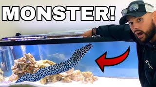 AQUARIUM SEA MONSTER PET CAUGHT EATING ON CAMERA!!