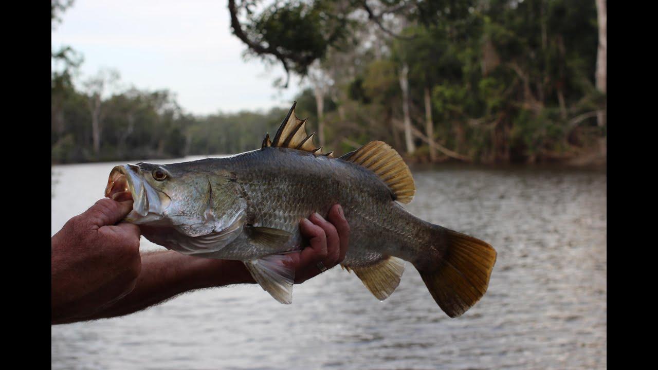 backyard fishing for barra youtube